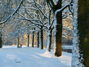 winter december 2010 008-b